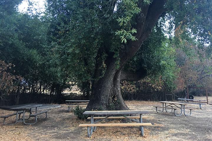 Bay Tree Picnic Area
